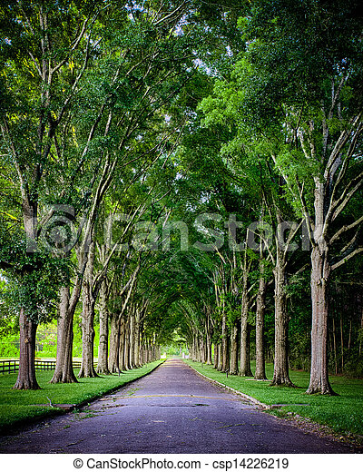 Rural road lined by oak trees - csp14226219
