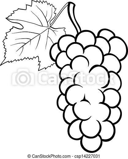 Vectors Of Grapes Illustration For Coloring Book