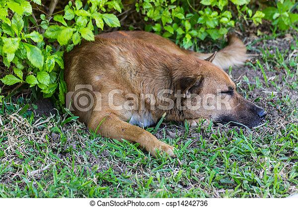 Photos de chien dormir sur pelouse csp14242736 for Pelouse tarif