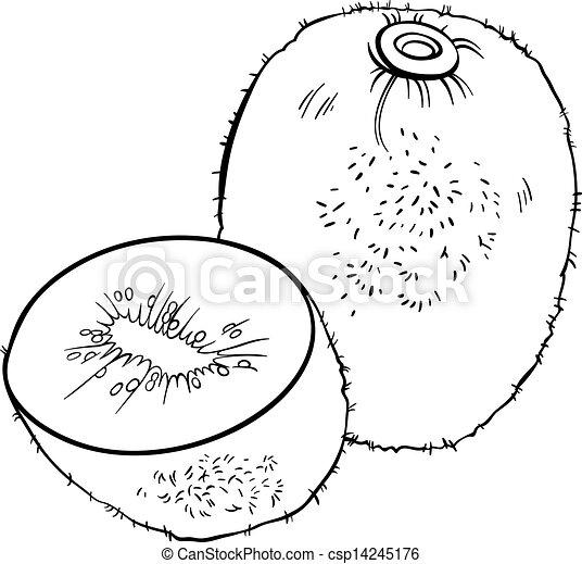 Kiwi Fruit Drawing Vector Kiwi Fruit