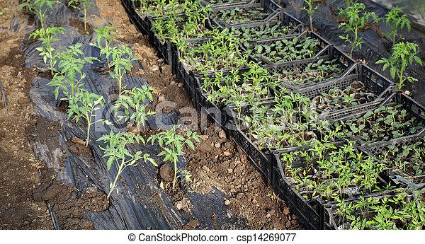 Agriculture - csp14269077