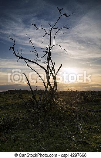 Stark bush silhouette against stunning sunset sky - csp14297668