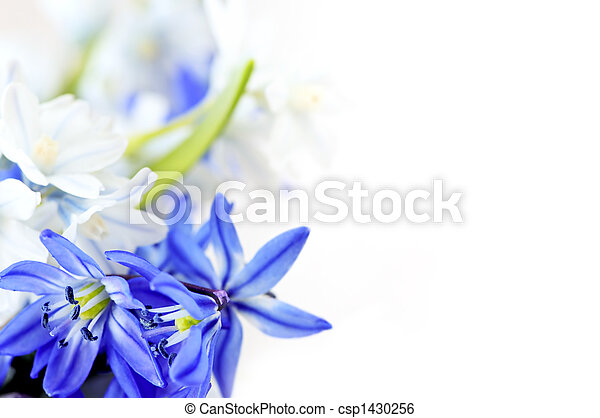 primavera, flores, fundo - csp1430256
