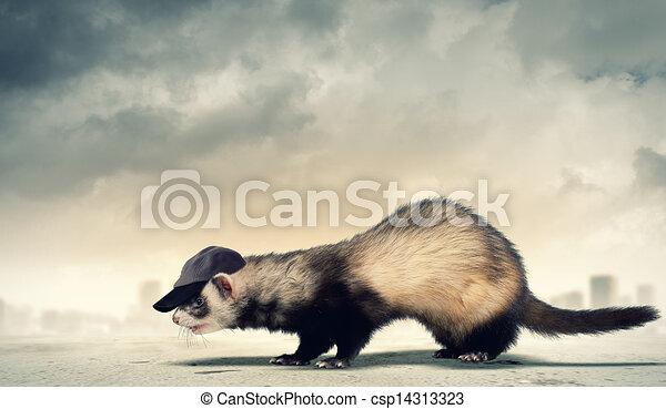 Funny ferret in hat - csp14313323