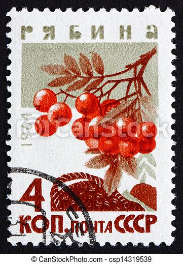 Postage stamp Russia 1964 Mountain Ash, Rowan, Deciduous Tree - csp14319539