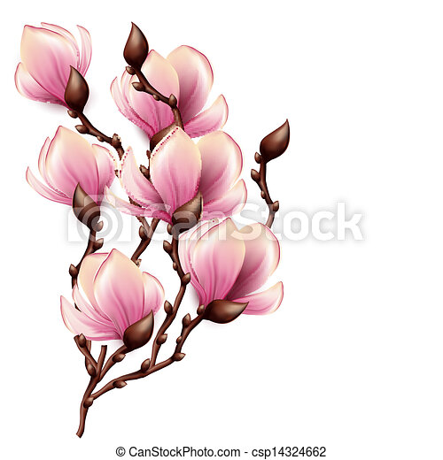 Clip Art Vector Of Magnolia Branch Isolated Csp14324662 Search Clipart Illustration Drawings