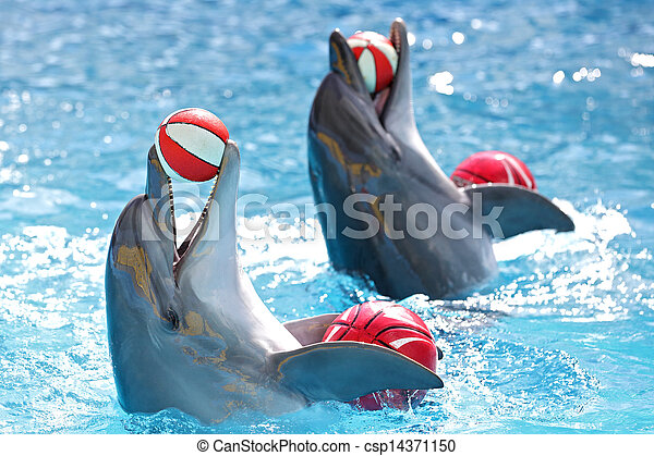 dolphins with balls - csp14371150