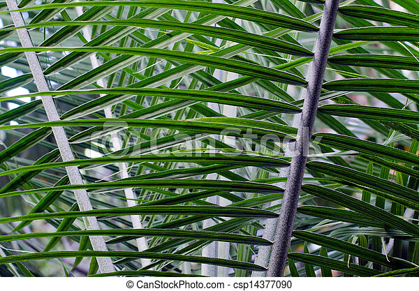 Palm tree leaf - csp14377090