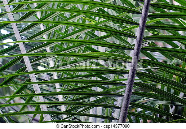 Palm tree leaf - csp14377090
