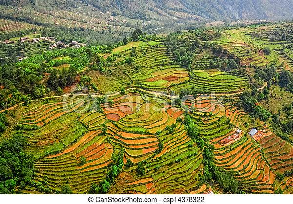 aéreo, coloridos, Terraços, campo, arroz, vista - csp14378322