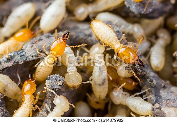 photographies de blanc termite fourmis ou fin haut termites ou csp14379902. Black Bedroom Furniture Sets. Home Design Ideas