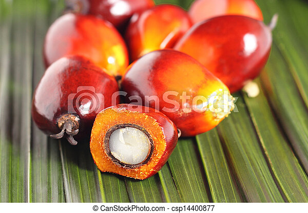 Oil palm fruit - csp14400877