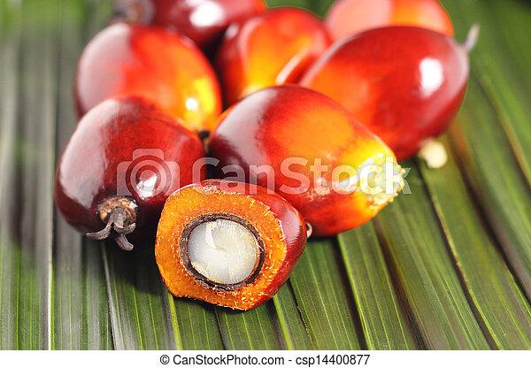 Oil palm fruit - csp14400877