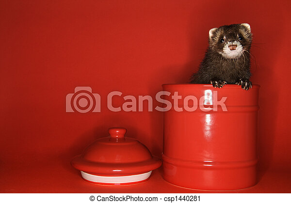 Ferret peeking out of jar. - csp1440281