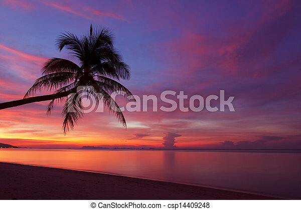 Tropical sunset with palm tree silhoette at beach - csp14409248