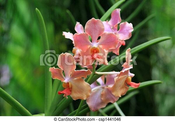 photo vanda orchid e image images photo libre de droits photos sous licence. Black Bedroom Furniture Sets. Home Design Ideas