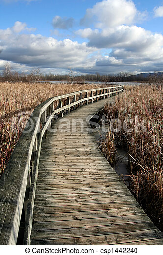 Deserted wooden path
