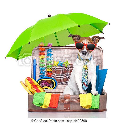 sommer feiertag, hund - csp14422808