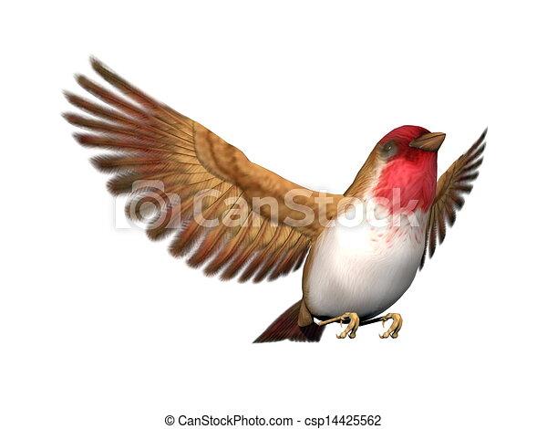 Bird With Open Wings Drawing Scarlett Finch Bird 3d