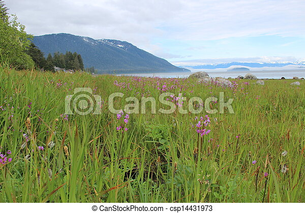 Alaska Island Landscape - csp14431973
