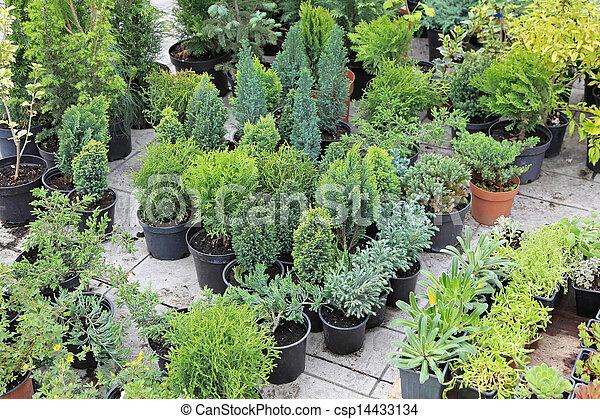 Stock de fotos rbol hoja perenne plantas imagenes for Ver fotos de arboles de hoja perenne