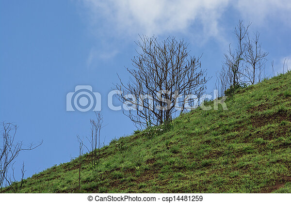 The Dead tree on the mountain of grass - csp14481259