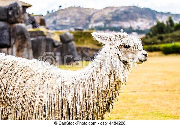 sacsayhuaman, prospekt, ściana, cuzco, peru. - csp14484228