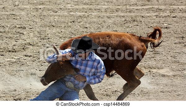 dogging), Lucha, novillo,  (bull - csp14484869