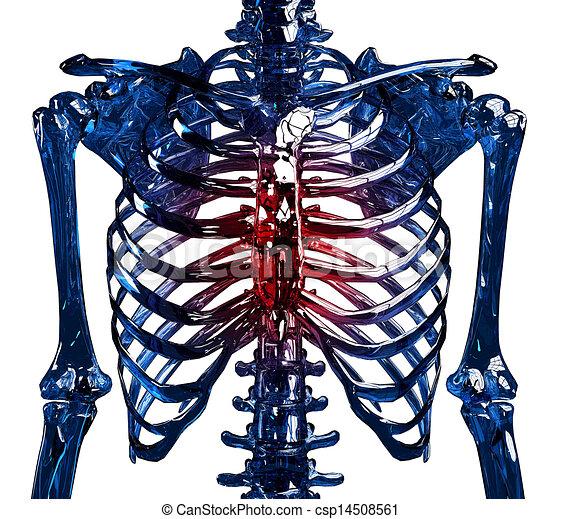 illustration de thoracique douleur squelette frontal vue de a csp14508561. Black Bedroom Furniture Sets. Home Design Ideas