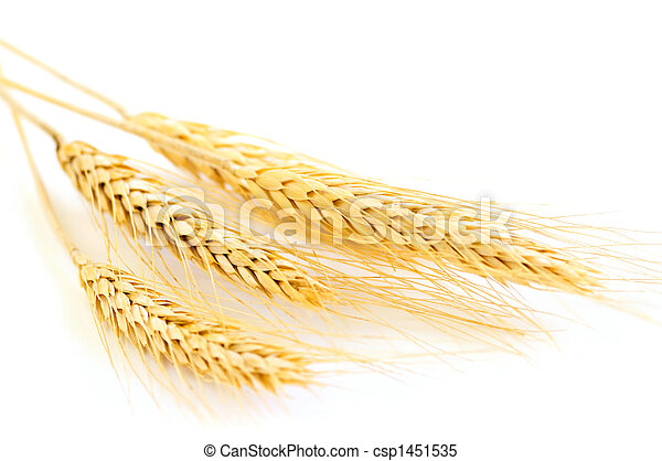 Isolated wheat ears - csp1451535
