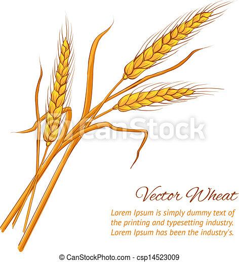 Ears of wheat. - csp14523009