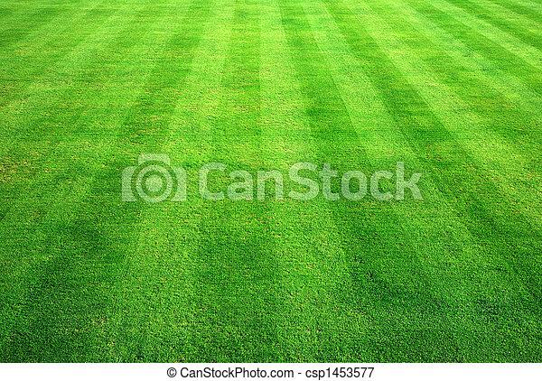 Bowling green grass background. - csp1453577