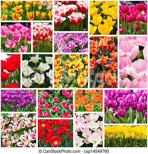 Stock Photo - Tulips collage. Spring flowers - stock image, images ...