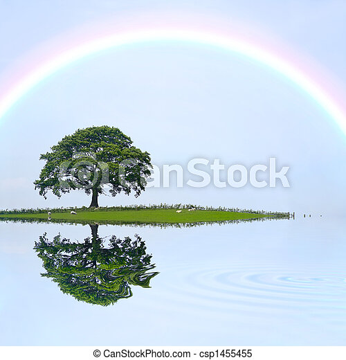 Oak Tree and Rainbow - csp1455455