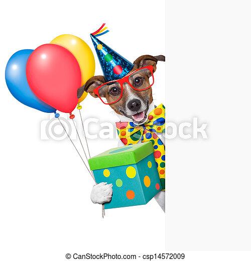 birthday dog  - csp14572009