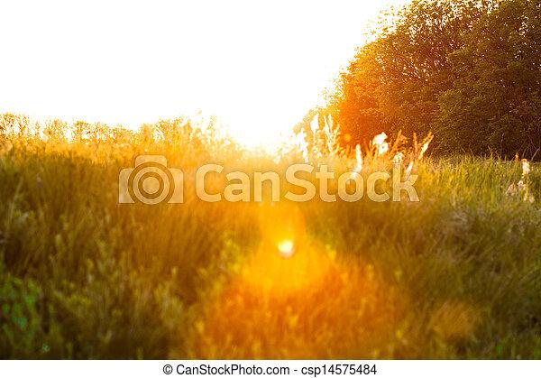 Sunset over field - csp14575484