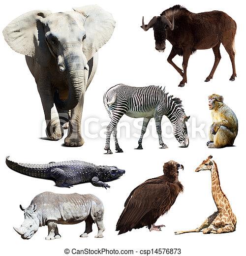 wenige, satz, tiere, afrikanisch - csp14576873