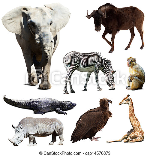 Set of few african animals   - csp14576873