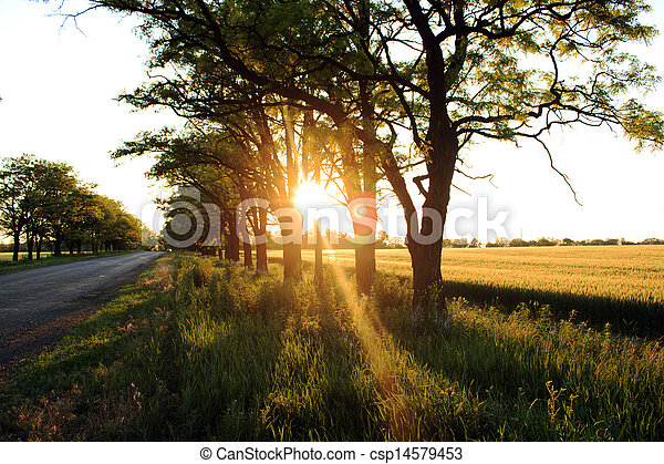 Rural road on sunset - csp14579453