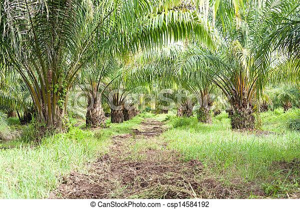 Oil Palm Plantation - csp14584192