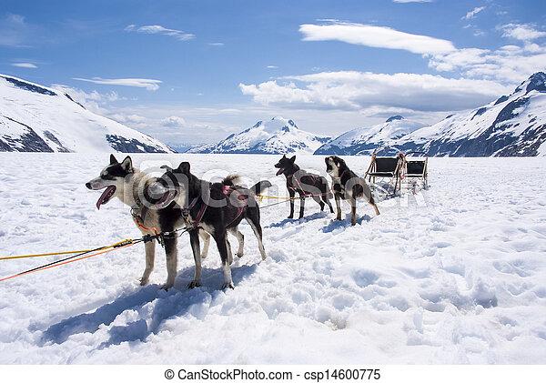 Alaska - Dog Sledding - csp14600775