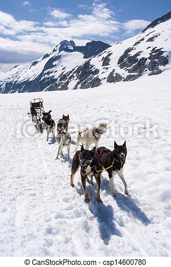 Alaska - Dog Sledding - csp14600780