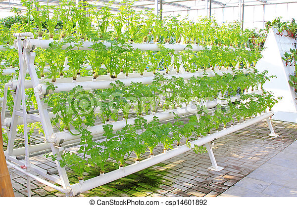 Stock photographs of soilless cultivation of green for Soil less farming