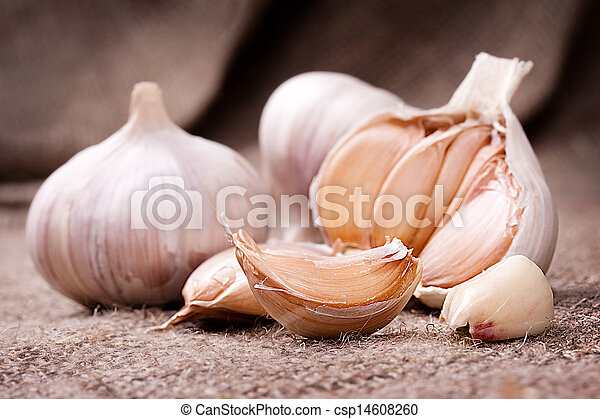 Fragrant garlic on background of coarse cloth