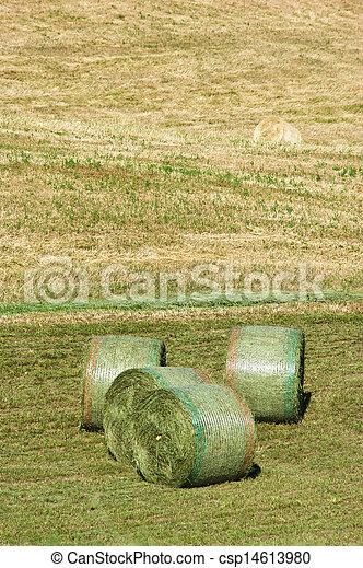 Agriculture - csp14613980