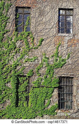 Immagini di edera rampicante parete abbandonato for Edera rampicante