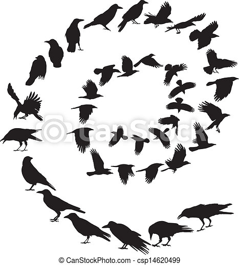 Carrion Crow in a spiral - csp14620499