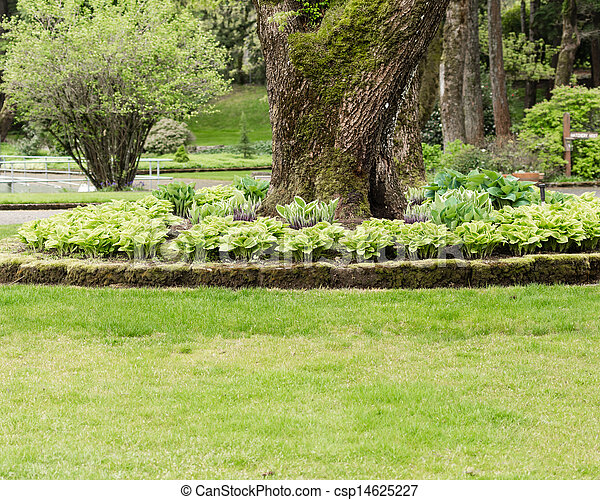 Photo de hosta jardin pelouse parc vert pelouse for Pelouse tarif