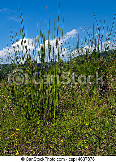 Wet grassland, pasture nature, agriculture background - csp14637878