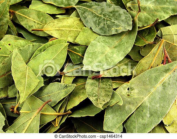 Seasoning, bay leaf - csp1464314